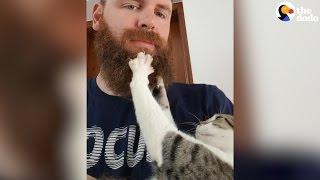 Cat Massages Her Dad's Beard