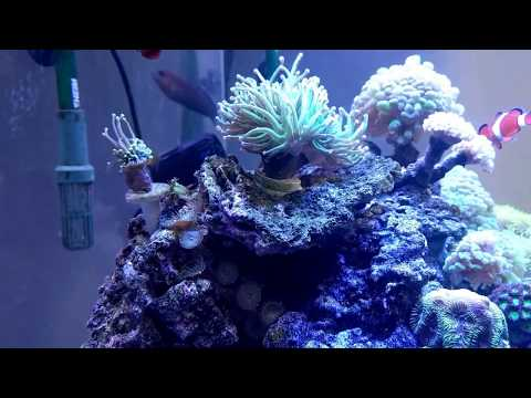 Canister filter reef tank. No sump, no skimmer, no refugium, no overflow. Just an Ehiem classic