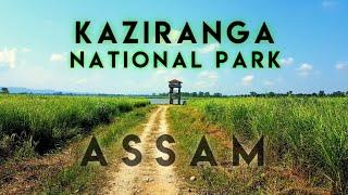 Kaziranga National Park Assam   Kaziranga Jeep Safari Kaziranga Wildlife