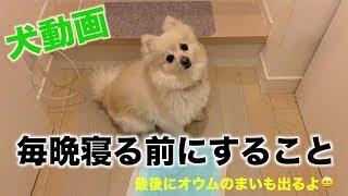 犬 #喋るオウム ポメラニアンのあとむ(9歳)は家の中でもオシッコとウンチをします。 そして寝る前にオシッコをしてから寝ます。 最後にオ...