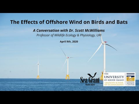 Ask the Experts: The Effects of Offshore Wind on Birds and Bats