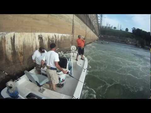 Wilson dam striper fishing on tennessee river with for Wilson river fishing report