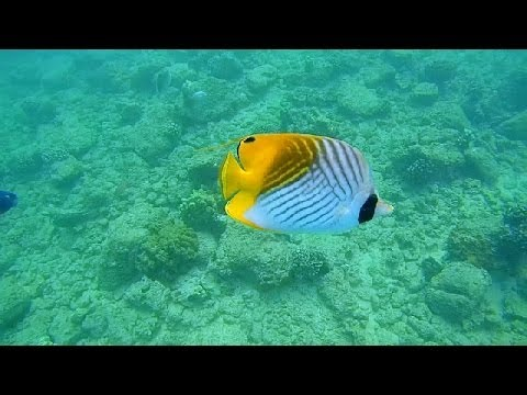 Epic Snorkeling Kauai, Hawaii: Poipu Beach HD