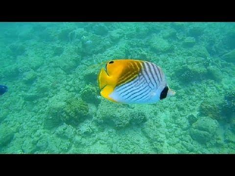 Epic Snorkeling Kauai, Hawaii: Poipu Beach HD