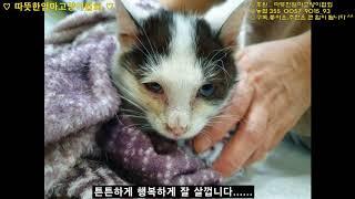 [따뜻한엄마고양이협회] 보란듯이 힘든질병 이겨낸 '자두…