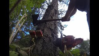 Falling a hard leaning tree