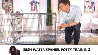 Irish Water Spaniel Potty Training from WorldFamous Dog Trainer Zak George  Water Spaniel Puppy