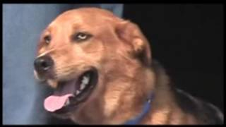the bite o meter understanding body language and facial expressions in dogs