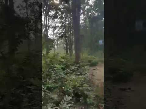 Bankura bishnupur Joypur forest
