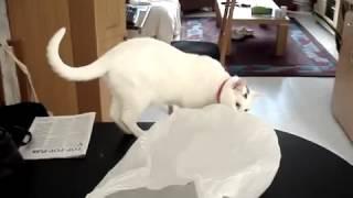 Кошка автомат