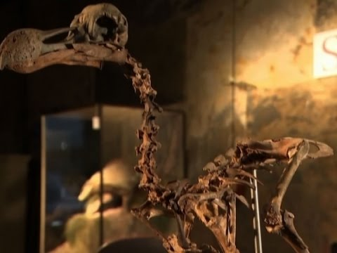 Dodo Skeleton Fetches Over $400,000 at Auction