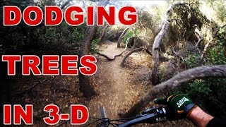 Dodging Trees in 3-D || Rare Pygmy Forest|| DH MTB || WAIN Episode #27