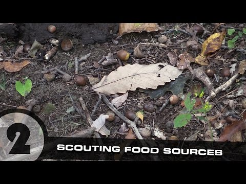 Scouting Whitetail Deer Part 2: Scouting Food Sources