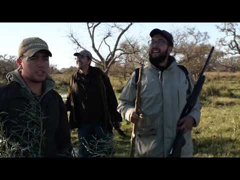 Hunting Argentina Duck, Dove, Partridge, Pigeon