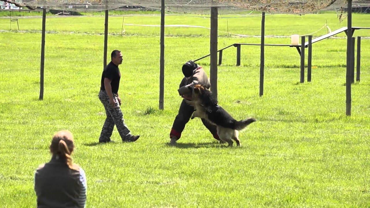 Atak Na Meczet Photo: Atak Owczarka Na Rękę Pozoranta Cz.1