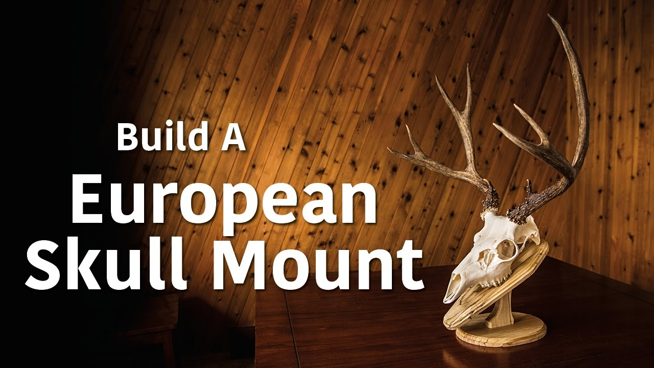 photograph relating to Printable Deer Plaque Template identified as Generating a Ecu Mount Wall Plaque/Desk Pedestal