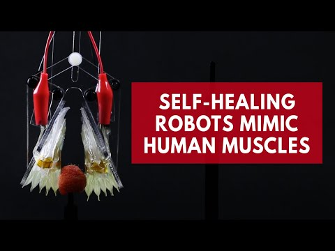Watch self-healing robots mimic human muscles
