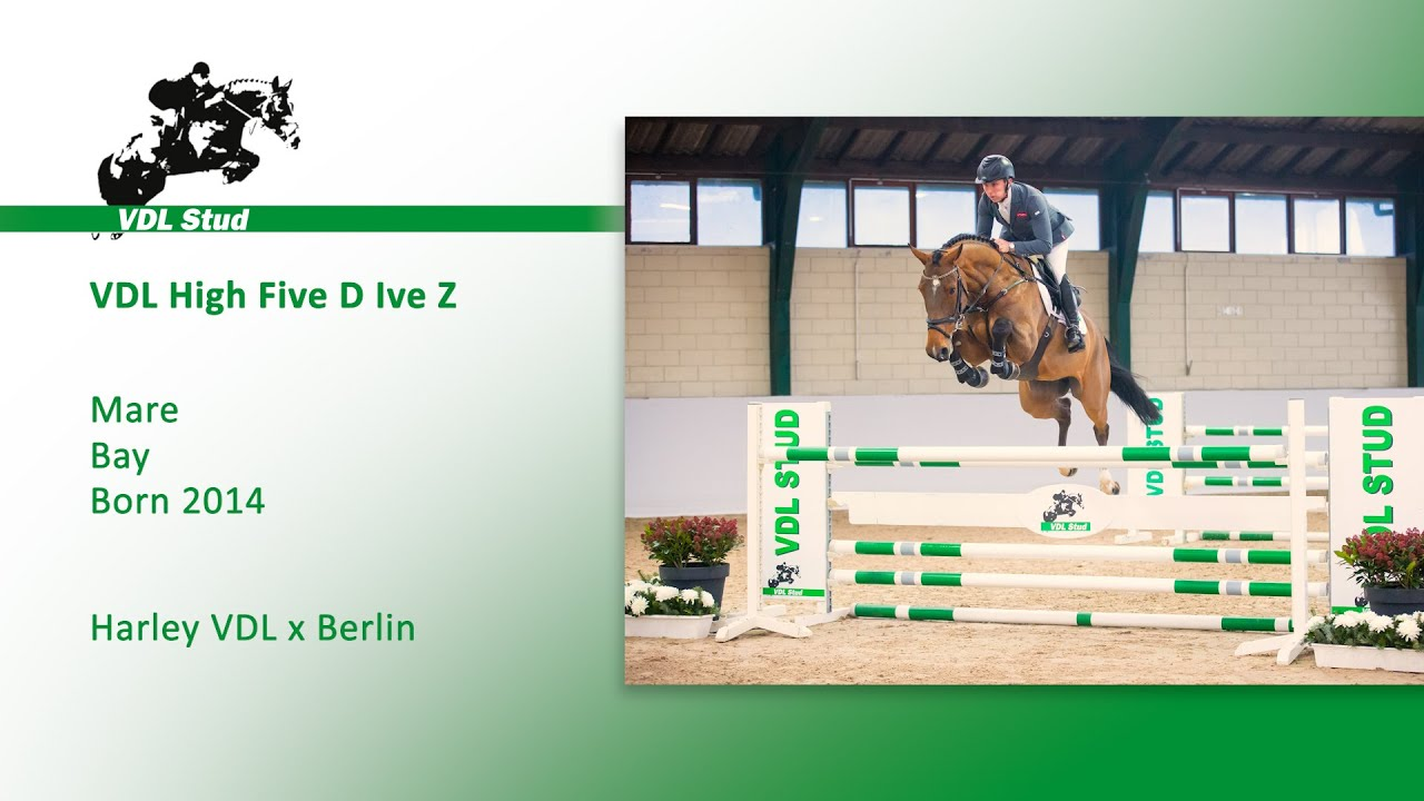 10. VDL High Five – Mare – Bay – Born 2014 – Height: M Level Competing at:  1.35m - YouTube