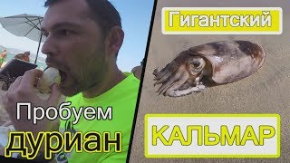 👍Вьетнам, Нячанг - Часть 5. Гигансткий кальмар 🦑 на пляже Зоклет. Пробуем дуриан.