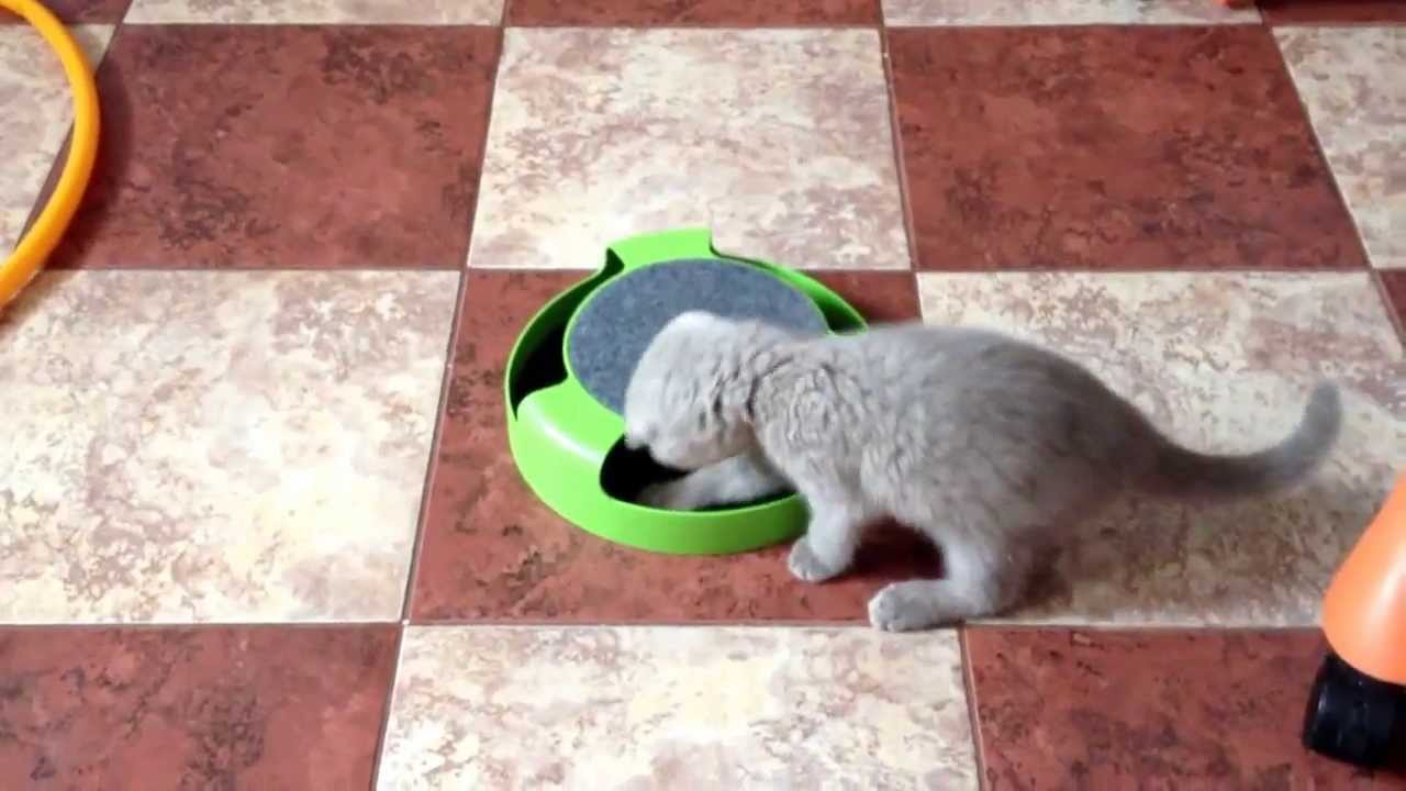 Когтеточки для кошек по недорогой цене v в интернет зоомагазине