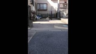 近所の猫が喧嘩をしていたのですが、あまりに素敵なハーモニーだったの...