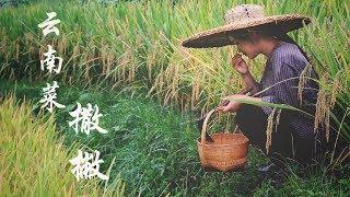 """撒撇(sā piě),一道吃一次就终生难忘的云南""""黑暗料理""""【滇西小哥】"""