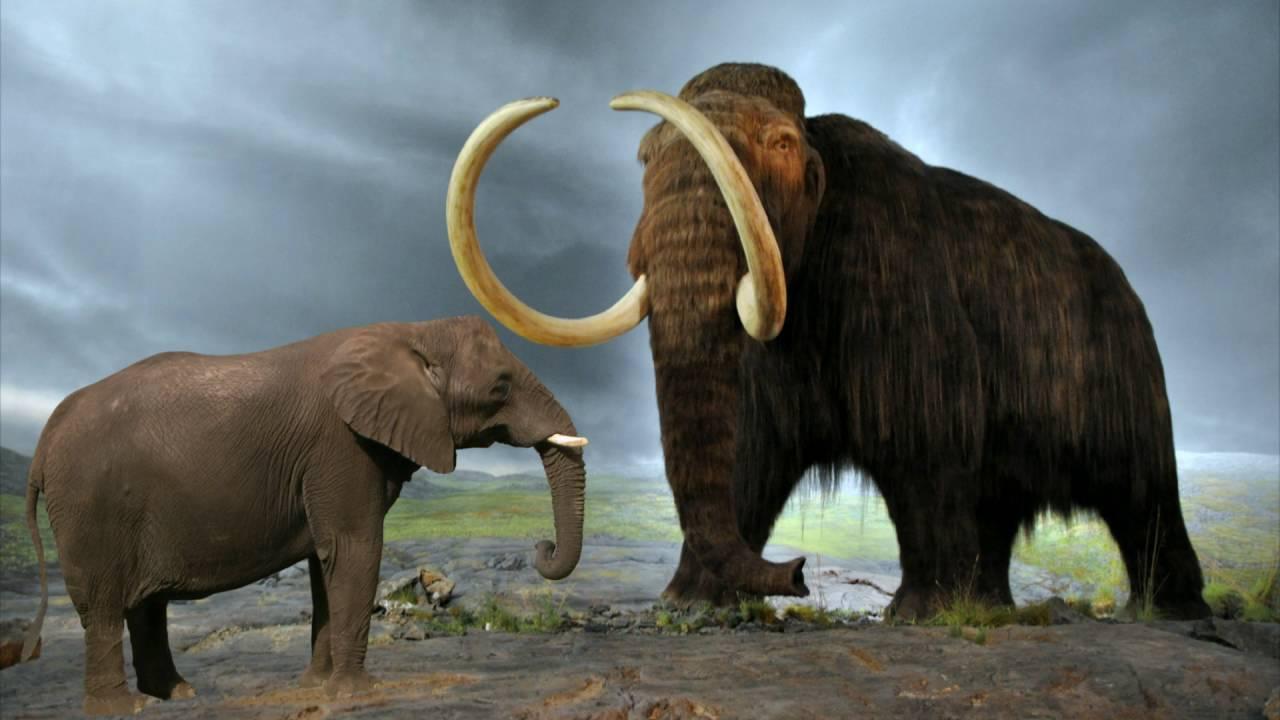 что свои мамонт и слон сравнение картинки мозговая показала