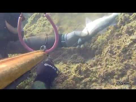 Podvodni ribolov, Oleg Vlahov, Plitki lov