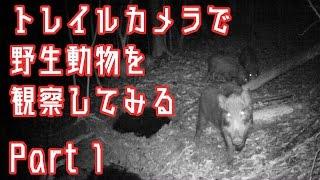 狩猟で使う山にトレイルカメラを仕掛けてみました。 猪・キツネ・タヌキ...