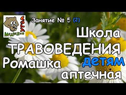 Школа ТРАВОВЕДЕНИЯ Занятие № 5 (2) РОМАШКА АПТЕЧНАЯ - детям