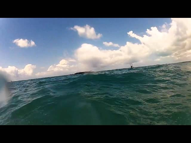 SWIMMING AMONGST DOLPHINS
