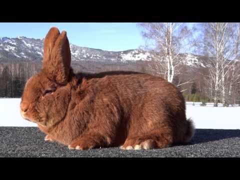 Кроличья ферма Кролист продажа кроликов в Тульской