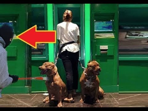Dogs Protecting Their Owners - Dogs that are better than guns! [Dog Training] # 2