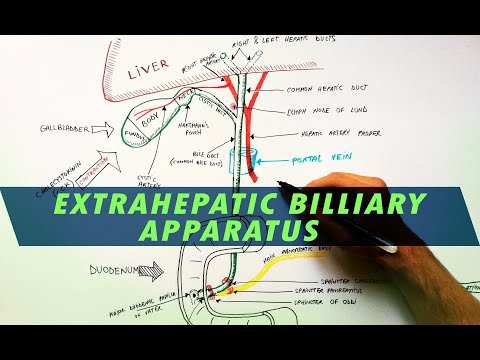 Extrahepatic Biliary Apparatus | Cystohepatic Triangle - Anatomy Tutorial