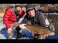 Download Flies And Fins - Colorado MP3 song and Music Video