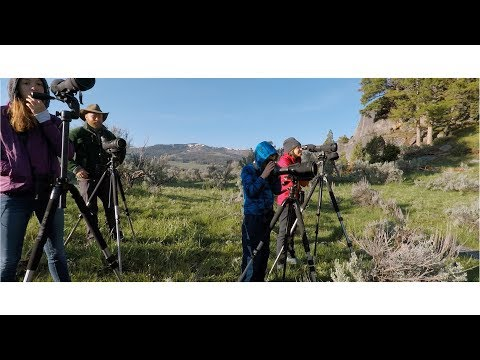 Yellowstone Wild Guided Tours - May 2017