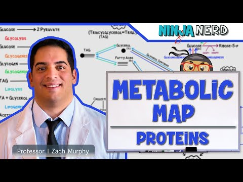 Metabolism   The Metabolic Map: Proteins   Part 3