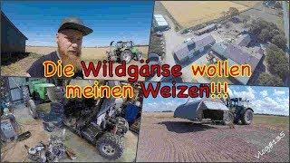 FarmVLOG#135 - Die Wildgänse wollen meinen Weizen!!!