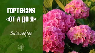 Гортензия и садовый декор видео обзор от интернет-магазина Хитсад