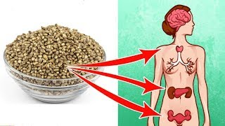 5 Amazing Health Benefits Of Hemp Seeds That Can Change Your Life