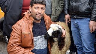 Gambar cover Koyunu peşini bırakmayınca, satmaktan vazgeçti