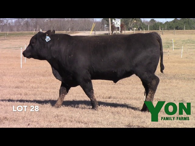 Yon Family Farms Lot 28