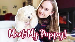 MEET OUR LITTLE PUPPY