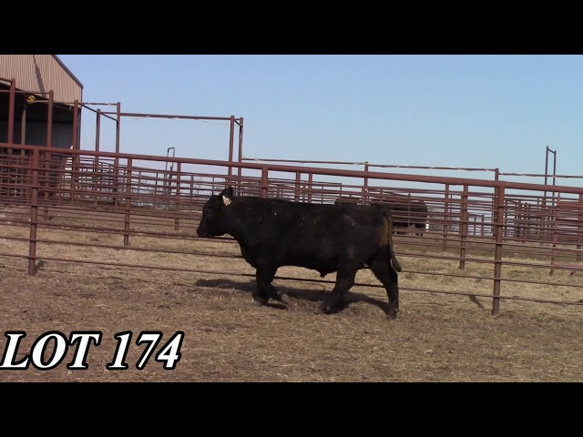 Mead Angus Farms Lot 174