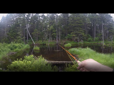 Three Ponds, Fly Fishing White Mountain National Forest, Part One