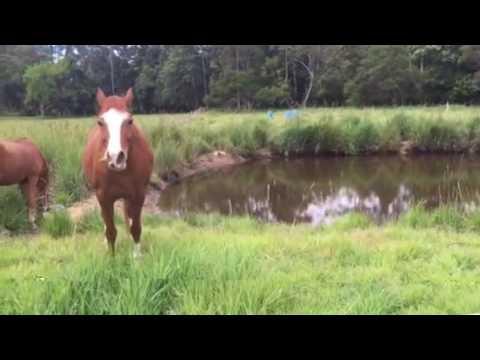 Holistic management grazing pasture