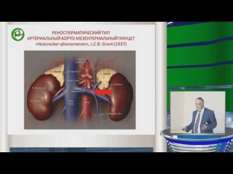 Капто А.А. Анатомические и физиологические предпосылки влияния варикоцеле на фертильность.