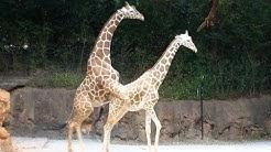 Die Bizarrsten Paarungsrituale der Tiere #2