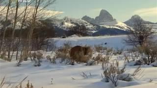 Кейси и Брут: В мире медведей   1