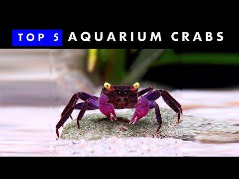 TOP 5 Aquarium Crabs | Knowing & Caring